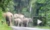 В Таиланде стадо слонов затоптало мотоциклиста: их зверства попали на видео