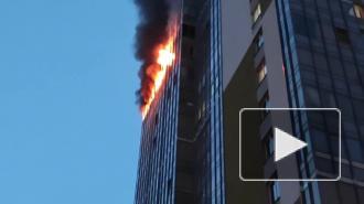 Во время пожара в Кудрово погиб кот