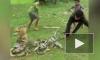 """На Филиппинах отважные дети спасли собаку из смертельных """"объятий"""" питона"""