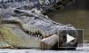 Дворники нашли на улице крокодила-людоеда в Калининском районе Петербурга