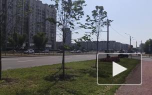 Жители улицы Кораблестроителей жалуются на небезопасную аллею для прогулок