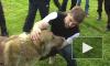 Нашли собаку Рамзана Кадырова, интернет ликует