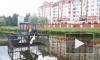 Водолазы спасли утят из очистительного коллектора реки Новой