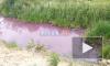 В поселке Металлострой ручей окрасился в фиолетовый цвет