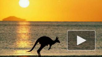 """Австралия ввела санкции против России: """"австралийский кенгуру"""" vs """"русский медведь"""""""