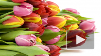 Идеи подарков на 8 Марта и поздравления любимым женщинам в стихах, прозе, прикольные смс с юмором