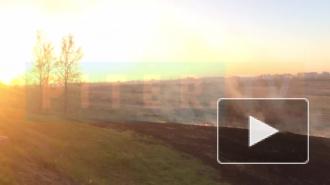 Сезон пожаров открыт: горит трава на Петербургском шоссе