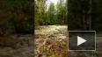 Отважный дед спас семью от медведя под Печорой