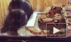 На Youtube уничтожены ролики жестокого скармливания удаву животных, живодера пытаются засудить