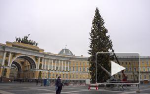 Piter.TV узнал, почему елка на Дворцовой стоит 13 миллионов