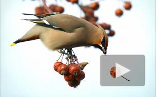 Орнитолог рассказал, какие птицы прилетели на зиму в Петербург