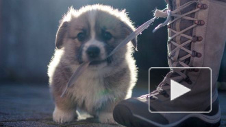 Куда пойти с собаками в Петербурге: гид для хозяев и их питомцев