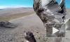 Охоту орла на лисицу сняли на GoPro от первого лица
