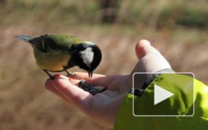 Как сделать правильную кормушку для птиц