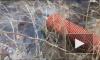 Экоактивисты нашли в Янино-1 сток, загрязняющий окружающую среду