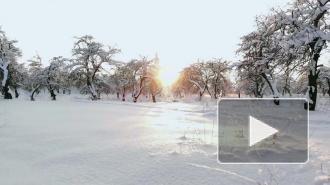 В Гидрометцентре рассказали о погоде в России за неделю до Нового года