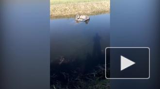 Видео с места трагедии: В Волгоградской области при падении автомобиля в канал погибли пять человек