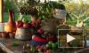 Ореховый спас в 2014 году отпразднуют покупкой безделушек, сбором веников и проверкой примет