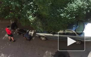 В доме на Херсонской улице собаки десять дней провели в квартире с мертвой хозяйкой